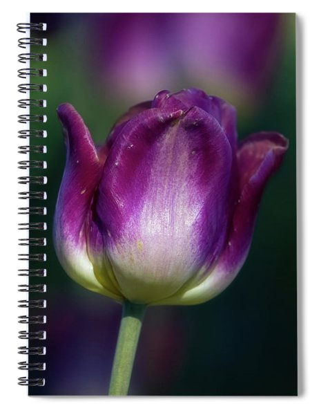 Spiral Notebook featuring the photograph Tulip Time 3 by Heather Kenward