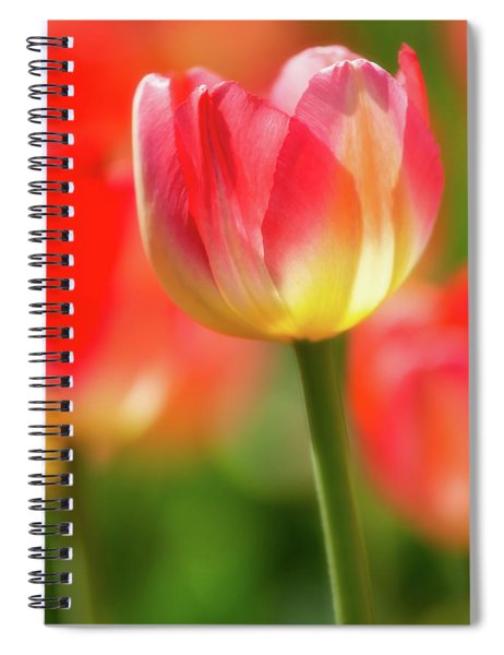 Spiral Notebook featuring the photograph Tulip Time 42 by Heather Kenward
