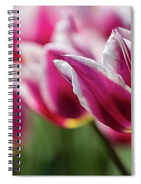 Spiral Notebook featuring the photograph Tulip Time 46 by Heather Kenward