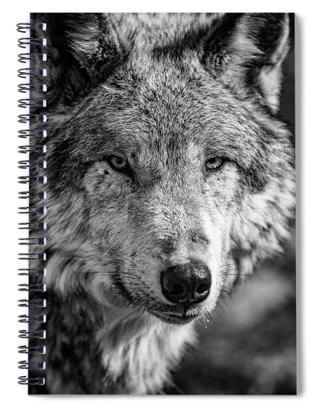 Tundra Wolf Spiral Notebook