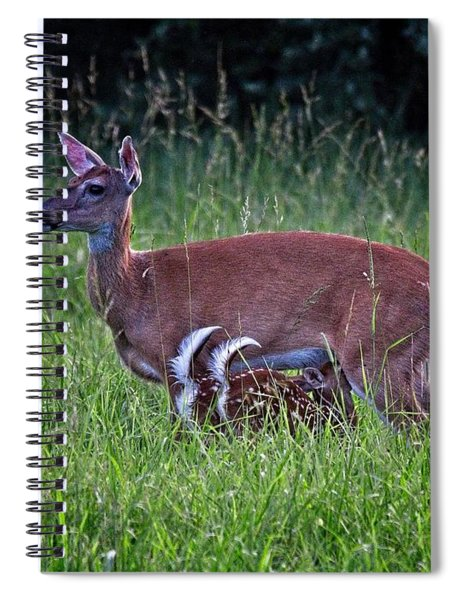 Twin Fawns Feeding Spiral Notebook
