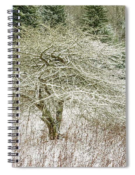 Twisted Dotted Thorn Tree Snow Spiral Notebook