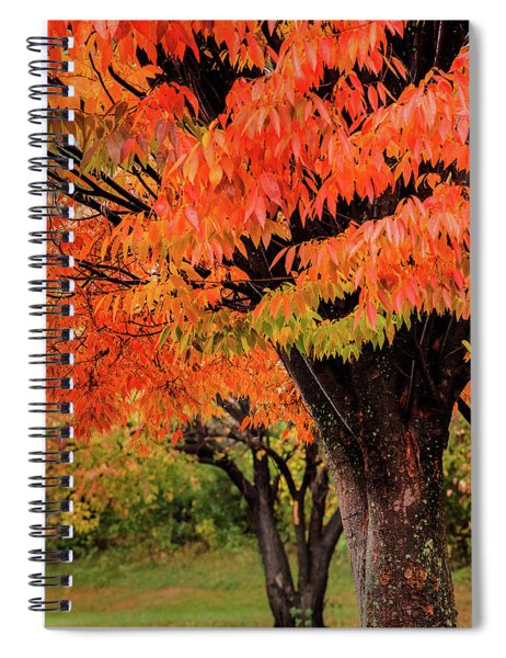 Two Fall Trees Spiral Notebook