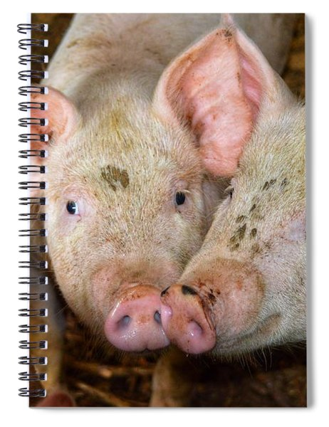 Two Pigs Spiral Notebook