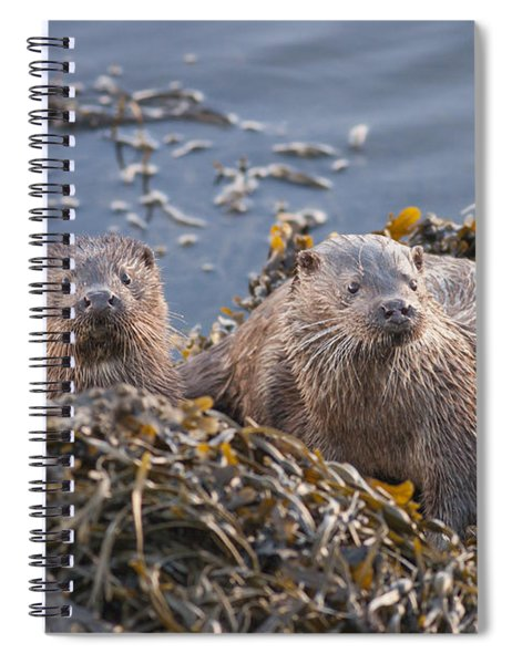Two Young European Otters Spiral Notebook