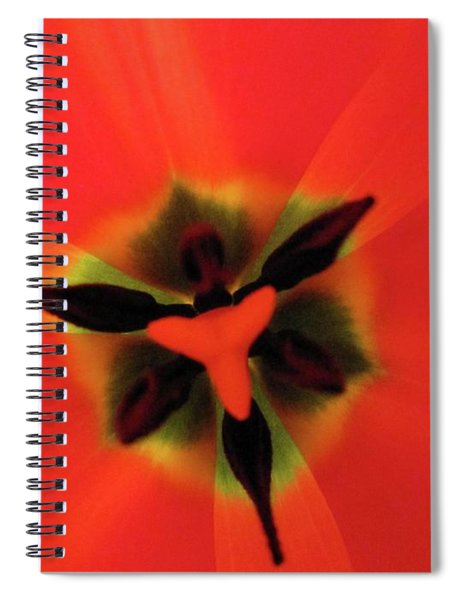 Ultimate Feminine Spiral Notebook