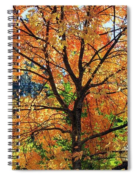Under The Golden Tree Spiral Notebook