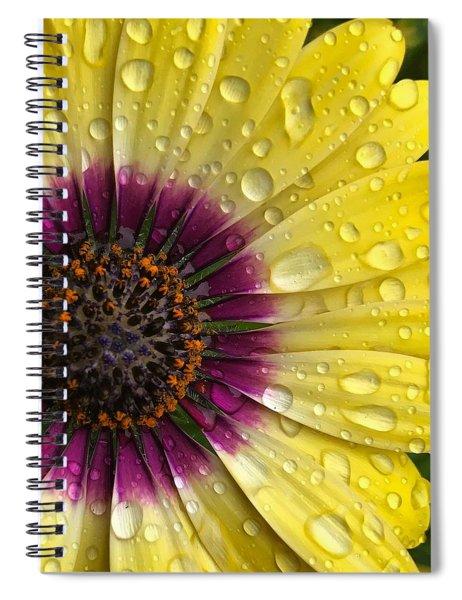 Daisy Up Close  Spiral Notebook