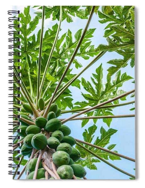 Up The Papaya Spiral Notebook