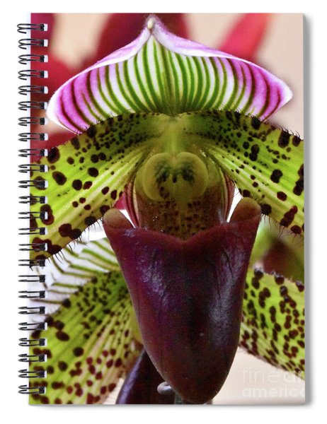 Variegated Spotted Paphiopedilum Orchid Spiral Notebook