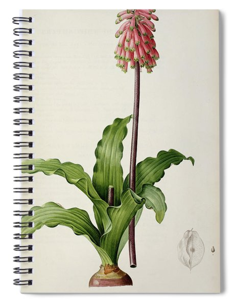 Veltheimia Capensis Spiral Notebook