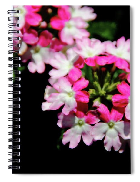 Verbena Sparkle Spiral Notebook