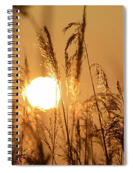 View Of Sun Setting Behind Long Grass B Spiral Notebook