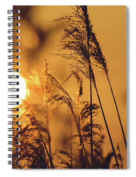 View Of Sun Setting Behind Long Grass C Spiral Notebook