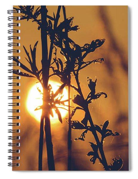 View Of Sun Setting Behind Long Grass D Spiral Notebook