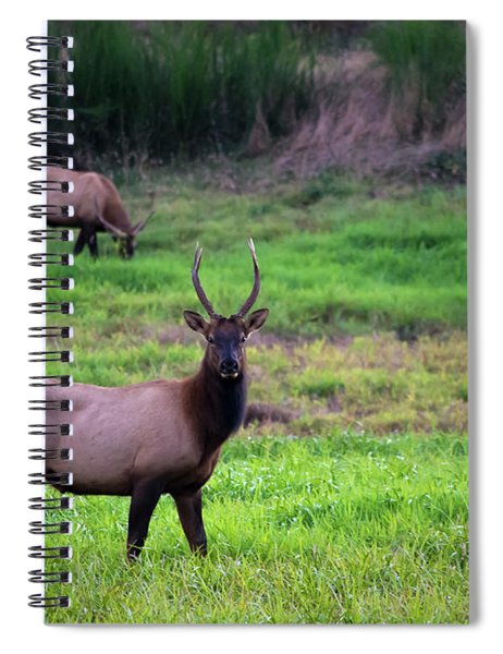 Vigilant Spiral Notebook