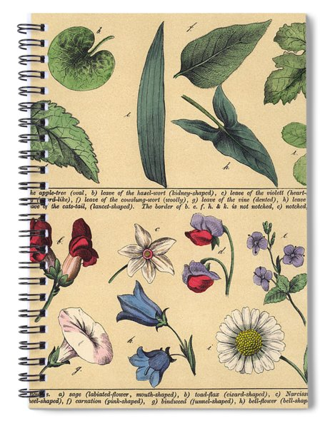 Vintage Botanical Print Showing Variety Of Leaves And Flowers Spiral Notebook