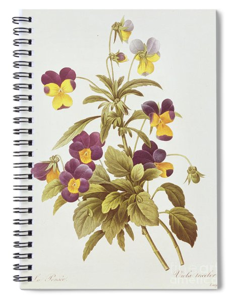 Viola Tricolour  Spiral Notebook