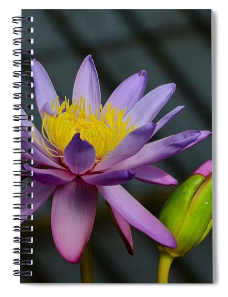 Violet And Yellow Water Lily Flower With Unopened Bud Spiral Notebook