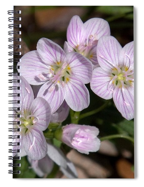 Virginia Or Narrowleaf Spring-beauty Dspf041 Spiral Notebook