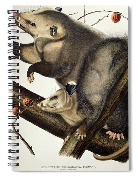 Virginian Opossum Spiral Notebook