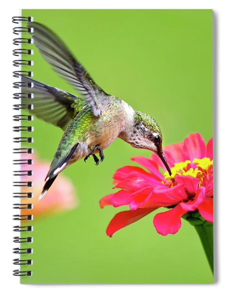 Waiting In The Wings Hummingbird Square Spiral Notebook