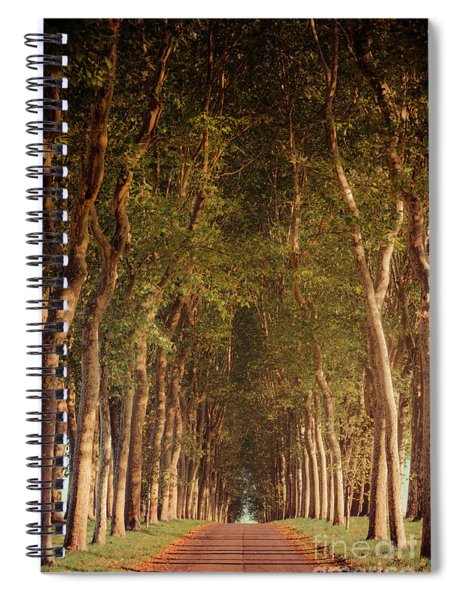 Warm French Tree Lined Country Lane Spiral Notebook