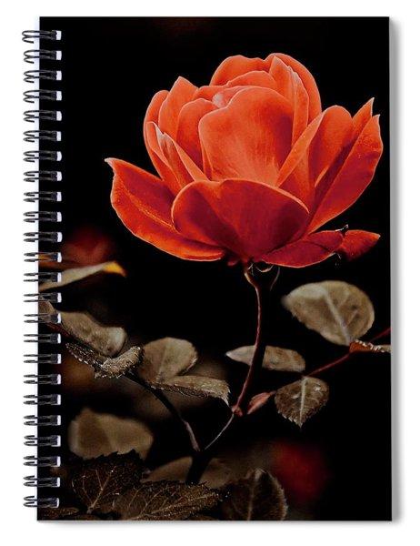 Warm Sepia Rose Spiral Notebook
