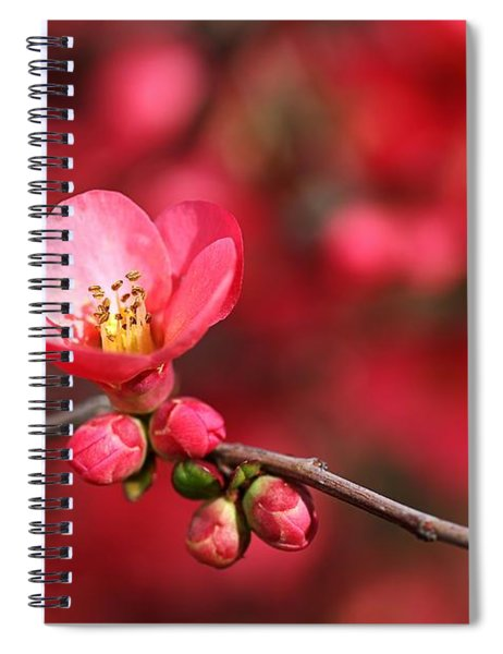 Warmth Of Flowering Quince Spiral Notebook