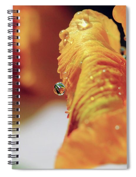 Water Drop On Orange Petal Spiral Notebook