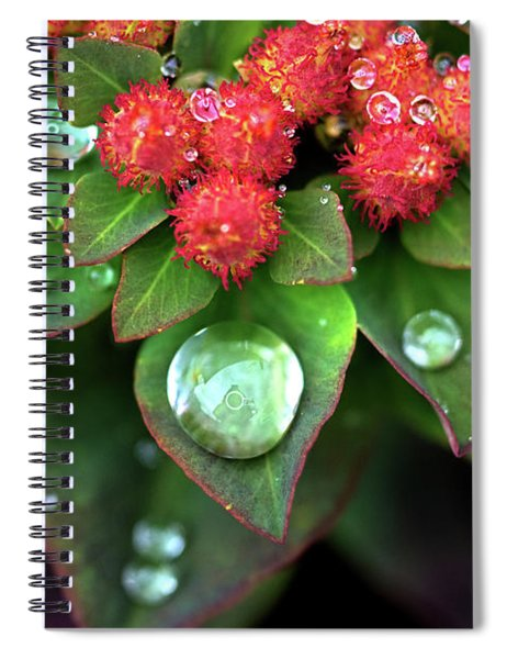 Water Drops On Christmas Flower Spiral Notebook