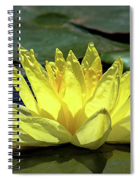 Spiral Notebook featuring the photograph Water Lily by Alison Frank