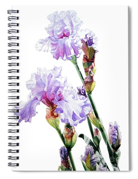 Watercolor Of A Tall Bearded Iris I Call Lilac Iris Wendi Spiral Notebook