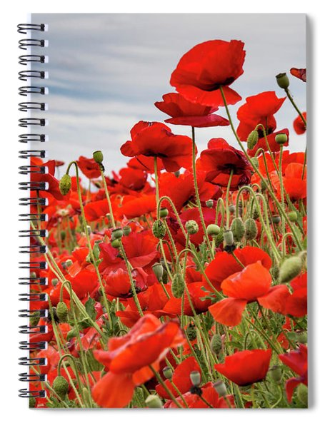 Waving Red Poppies Spiral Notebook