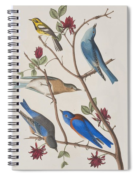 Western Blue-bird Spiral Notebook