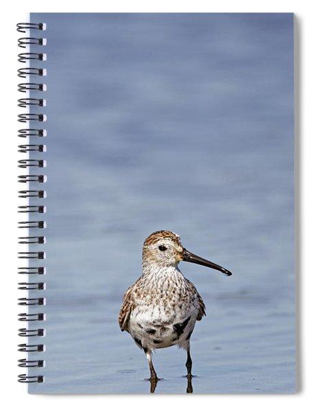 Western Sandpiper - Minimalist Spiral Notebook
