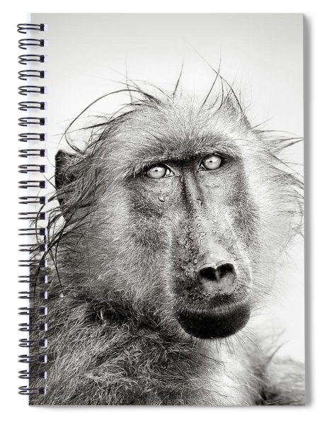Wet Baboon Portrait Spiral Notebook