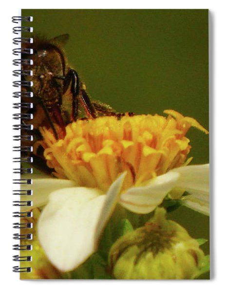 What You Looking At? Spiral Notebook