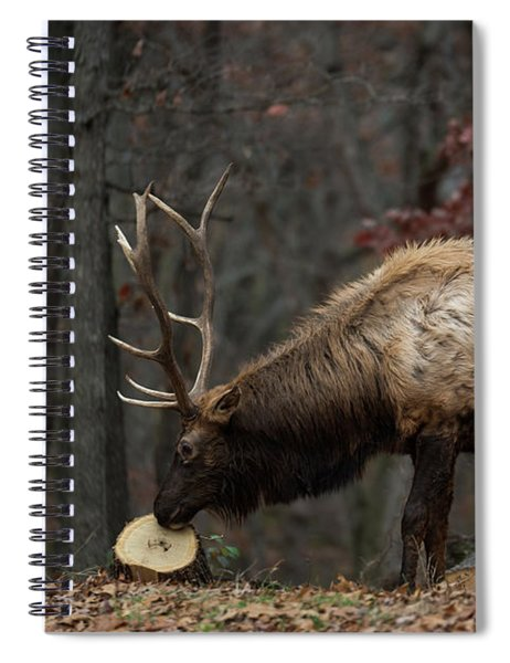 What's This? Spiral Notebook