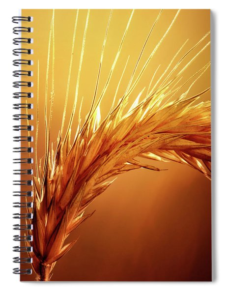 Wheat Close-up Spiral Notebook