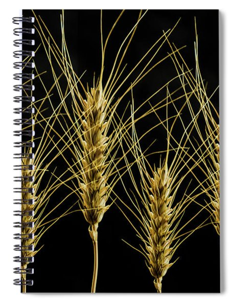Wheat In A Row Spiral Notebook