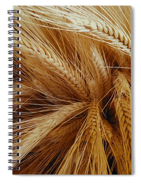 Wheat In The Sunset Spiral Notebook