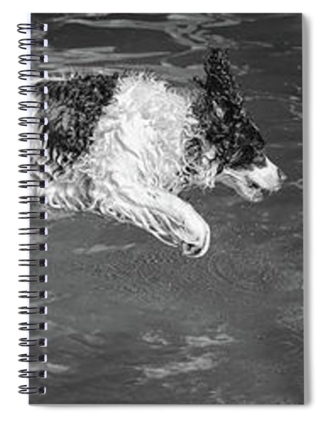 When English Springer Spaniels Fly Bw Spiral Notebook