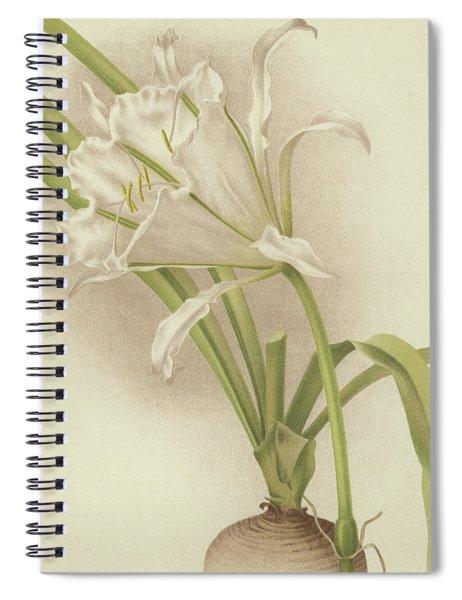 White Amaryllis   Ismene Andreana Spiral Notebook