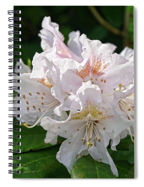 White And Pink Rhododendron Spiral Notebook