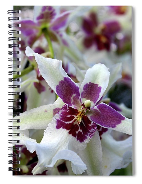 Purple And White Orchid Spiral Notebook