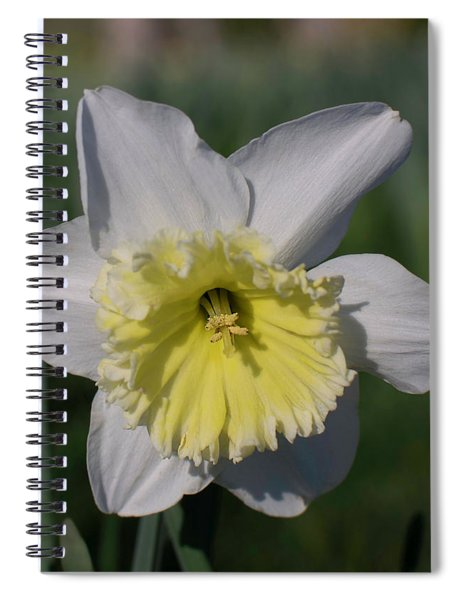 White And Yellow Daffodil Spiral Notebook
