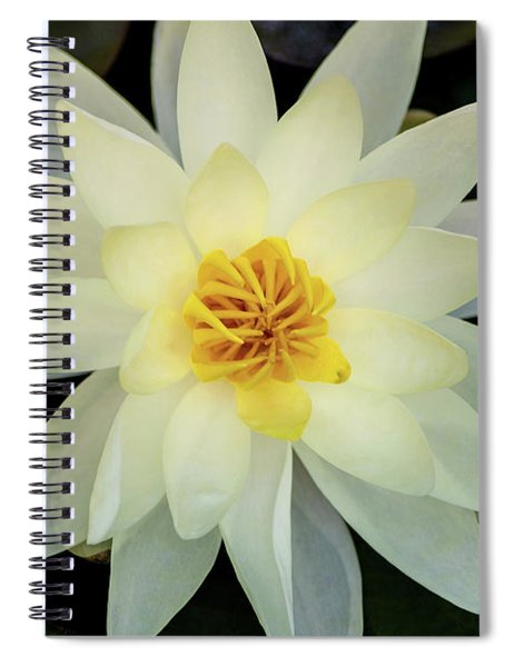White And Yellow Water Lily Spiral Notebook