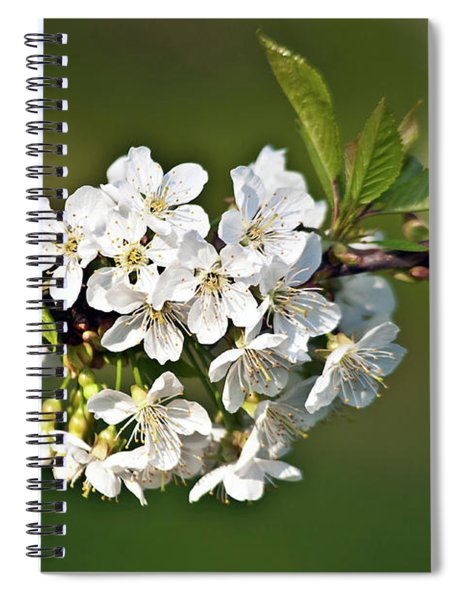 White Apple Blossoms Spiral Notebook