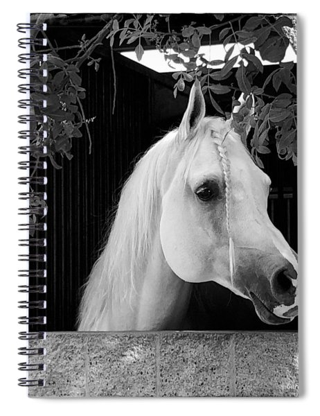 White Beauty - Series #5 Spiral Notebook